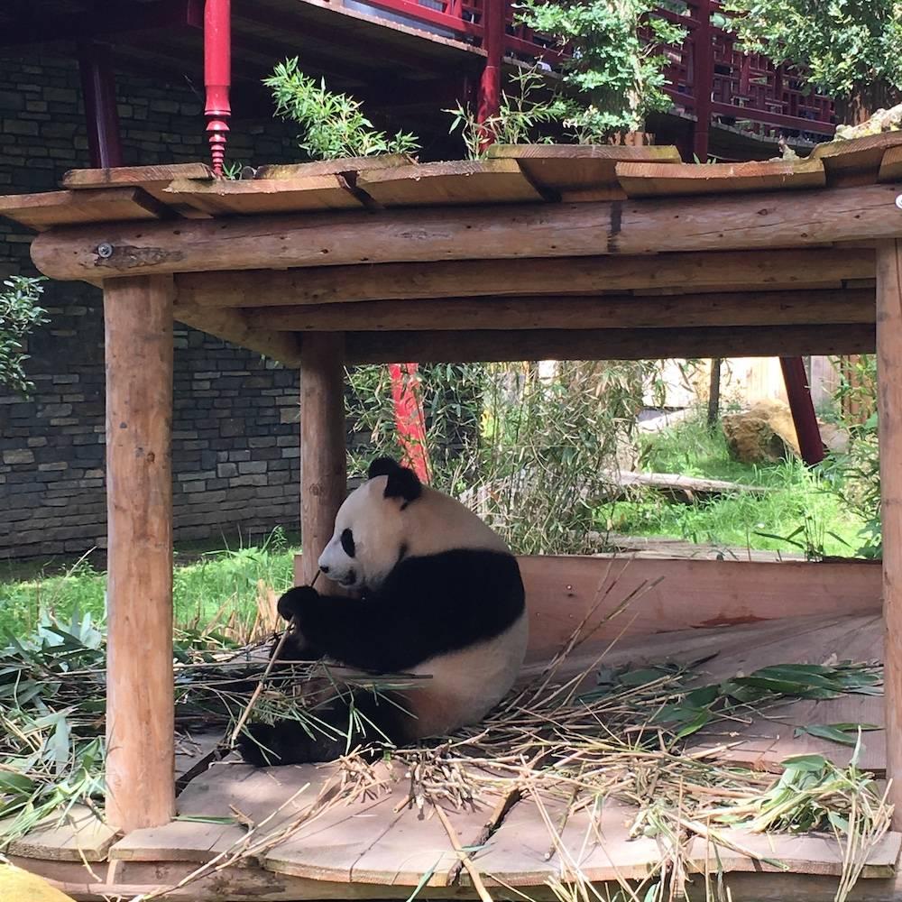 Plog: dagje panda's kijken met Danerolles