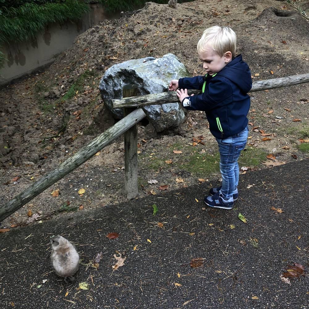 DIARY: examens, Skyler ziek, dierentuin & bos